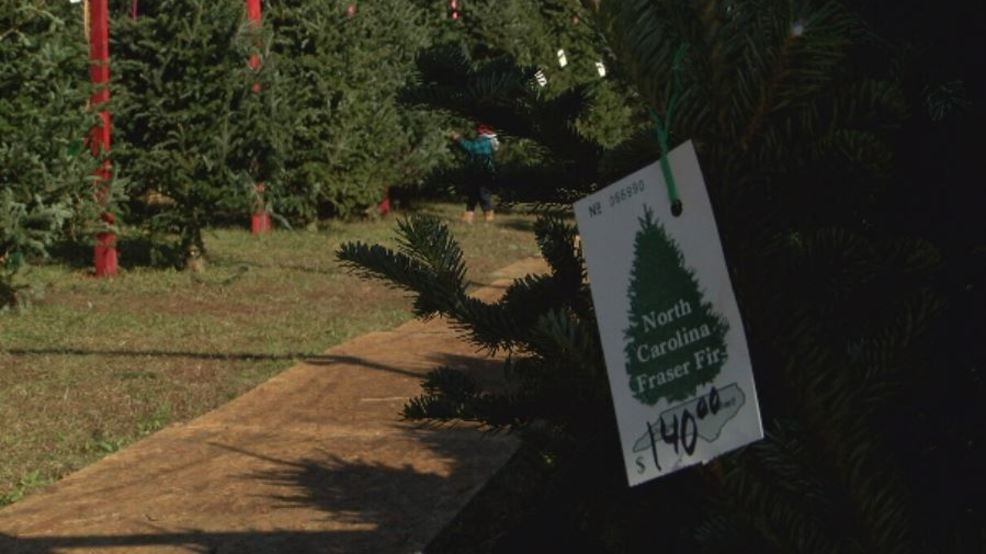 Christmas Tree Shortage.Droughts Fires In North Carolina Lead To Local Christmas