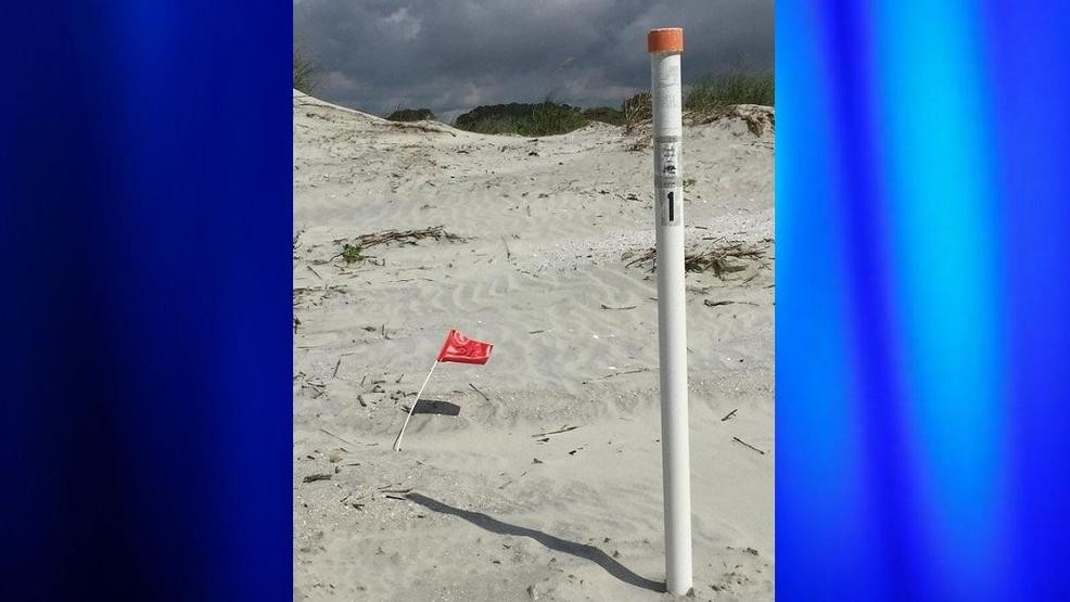 Nesting season begins early in SC with 2 unusual events | WPDE